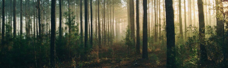 Blog o ekologii i ogrzewaniu